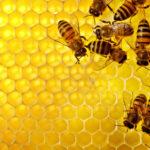 Voglio essere efficiente come un'ape. O efficace???